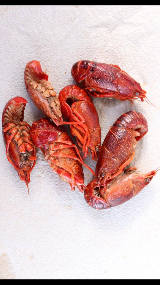 Grouping of seven cooked red crawfish on a white paper towel, from The Crab Shack on Tybee Island, GA.