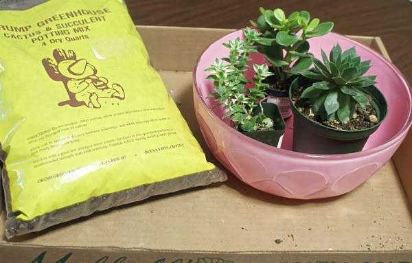 Kitschy Indoor Succulent Garden DIY